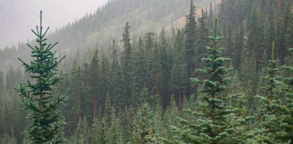 plantar árboles
