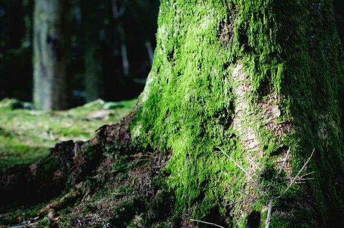 Biomasa de árbol