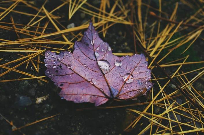 Hoja seca en el suelo - Qué es la lluvia ácida