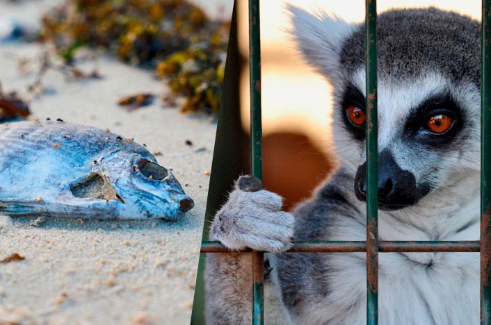 Causas generadas por el hombre de que los animales estén en peligro de extinción