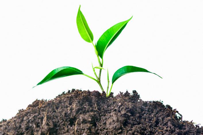 plantar pistachos en casa