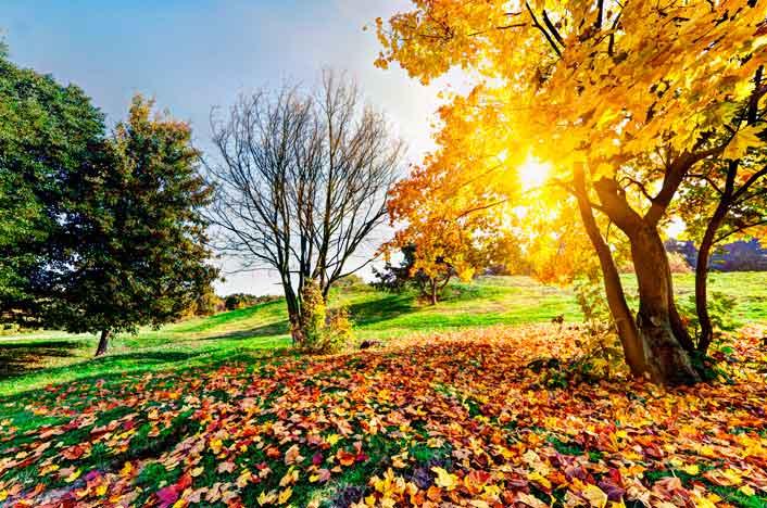 cómo identificar árboles por sus hojas