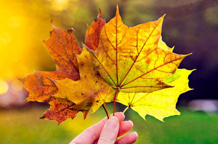 mano con hojas de árbol