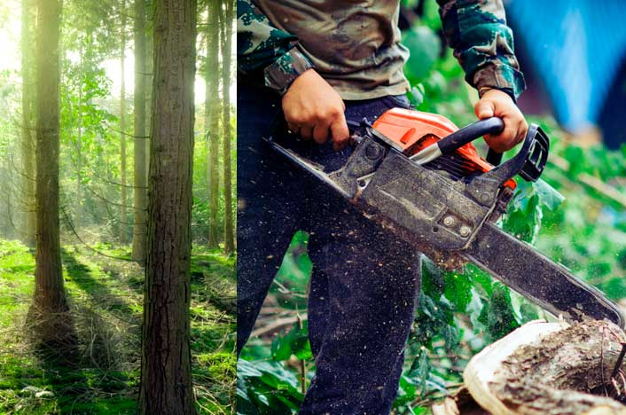 Funciones de la silvicultura