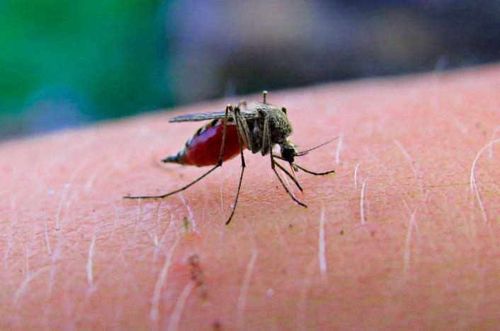 ahuyentar mosquitos con remedios caseros