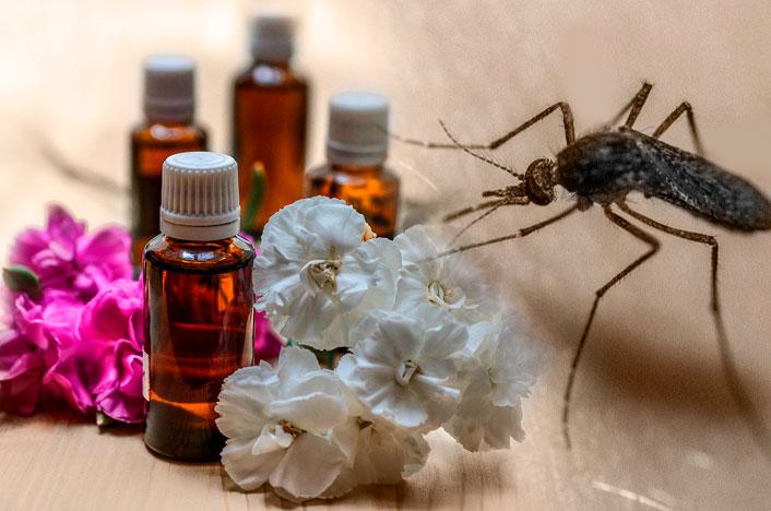 remedios caseros para mosquitos