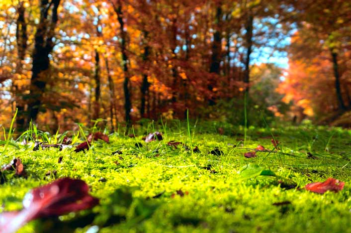 suelo con hojas