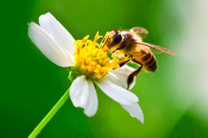 abeja en flor