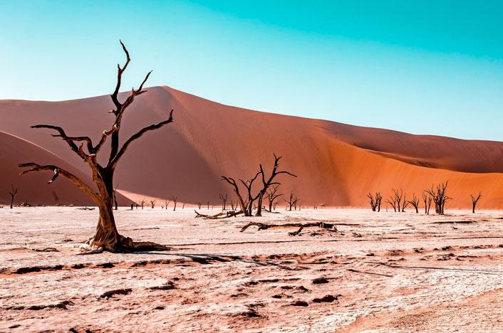 árboles en época de sequía